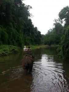 chian dao elephant camp