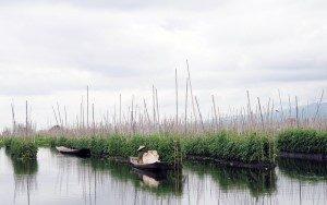 Inle Lake-Plantation on the lake Myanmar